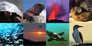 Arquipélago de Galápagos e suas exuberantes formas