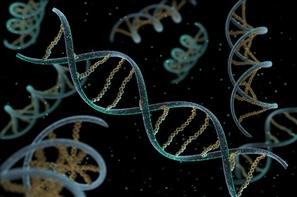 Há muitas informações em nosso DNA, (ainda) obscuras para nós