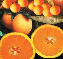 A utilização de giberelinas, na produção de frutos partenocarpicos. A pulverização desse hormônio durante o período de floração, em algumas espécies v