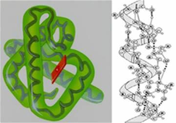Estrutura: primária, secundária e terciária de um polipeptídio