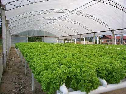 Cultivo de plantas por hidroponia