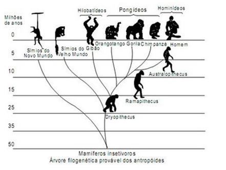"""O ser humano não """"veio"""" do macaco!"""