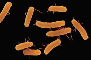 Salmonelas são responsáveis por doenças como febre tifoide e gastrenterite