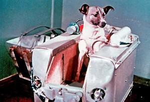 A cadela Laika foi o primeiro ser vivo a entrar no espaço