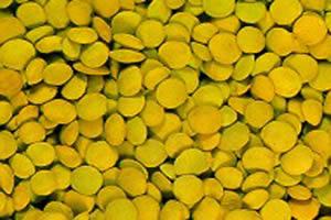 A principal forma de consumo da lentilha ocorre na culinária