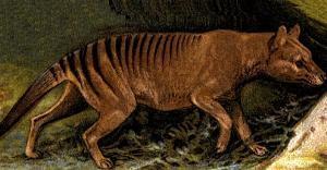 Lobo da Tasmânia: extinto desde 1936