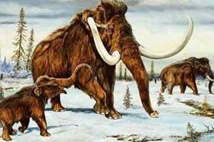 O mamute e o elefante pertencem à mesma família