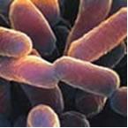 Micoplasma - Exemplo de Bactéria Exótica