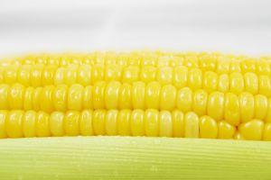 O milho é um dos cereais mais utilizados em todo o mundo