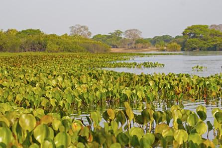 Típica paisagem do Pantanal
