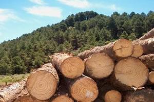A madeira é rica em celulose