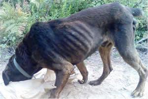 Nas cidades, métodos de controle de animais abandonados, como a castração, podem reduzir os casos de raiva