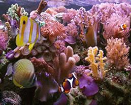 O sal carbonato de cálcio é encontrado nos recifes de corais e nas pérolas
