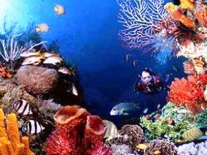 Recifes de corais são ecossistemas com grande produção e fluxo de energia