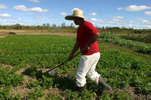 A distribuição de terras para plantio