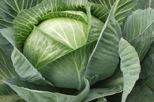 O repolho está entre os legumes com altos índices de fósforo