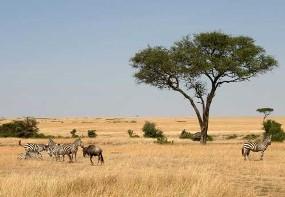 Paisagem constituída por Savana (África)