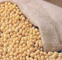 A soja é um grão rico em proteínas