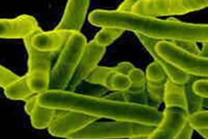 Bactéria responsável pela tuberculose.