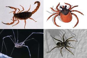 Escorpião, carrapato, opilião e aranha: alguns representantes da Classe Arachnida
