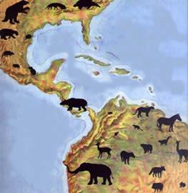 O intercâmbio genotípico entre as populações