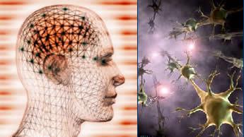 Neurônios: células que proporcionam memória