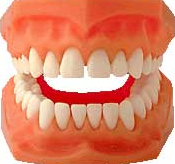 A oclusão estuda as relações de mordida entre a arcada dentária superior e inferior