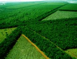 Silvicultura : Manejo florestal e florestamento