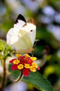 A função do biólogo é estudar, analisar e classificar os seres vivos e suas características.