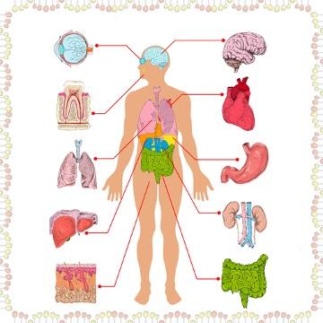 Conhecer o funcionamento do corpo humano pode ajudar na resolução de várias questões.