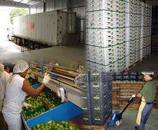 A logística soluciona problemas de armazenamento e transporte de mercadorias