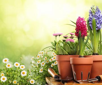 As plantas são organismos incluídos no Reino Plantae