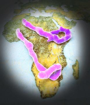 Surto de ebola já é considerado o maior da história.