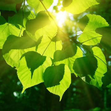 No processo de fotossíntese, ocorre a produção de carboidratos a partir do dióxido de carbono, água e energia luminosa