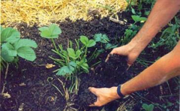 Diminuir os impactos da agricultura no meio ambiente é a principal meta desta tecnologia