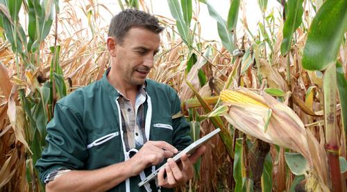 Auxiliar na implantação e gerenciamento do controle de qualidade é uma das funções do Técnico em Agricultura.
