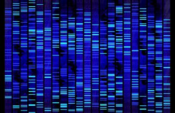 Os testes de DNA são feitos, principalmente, a partir de sangue e células bucais
