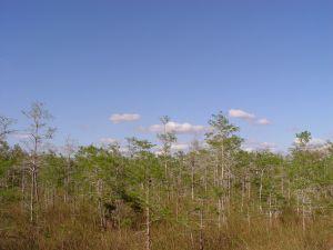 O engenheiro florestal analisa os ecossistemas florestais e propõe soluções para que esses ambientes não sejam degradados.