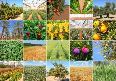 O espaço agrário e a agricultura são temas quase certos na prova do Enem