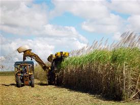 Cana-de-açúcar: matéria-prima que gera produtos lucrativos para o país