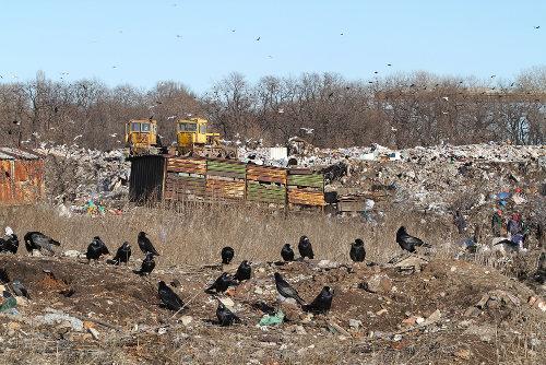 O acúmulo de lixo é um problema ambiental e também social