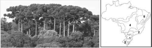 À esquerda, foto de mata de araucárias; à direita, mapa com domínios morfoclimáticos.