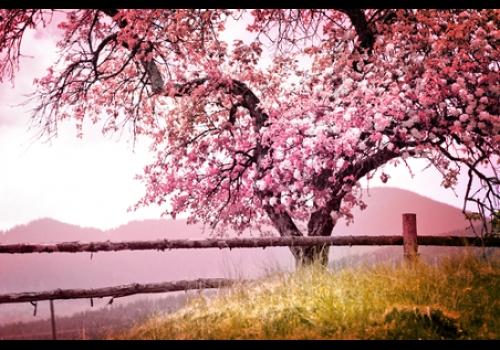 A primavera é a estação do ano que tem início com o fim do inverno.