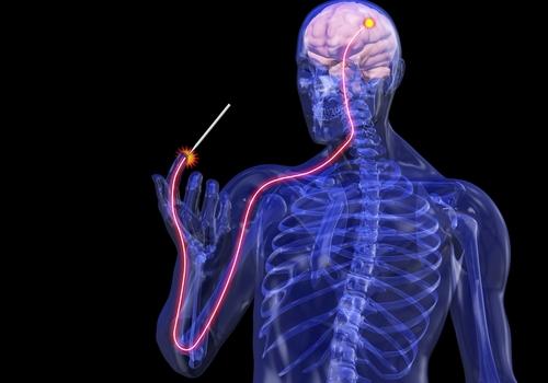 Resultado de imagem para sistema nervoso central 3d