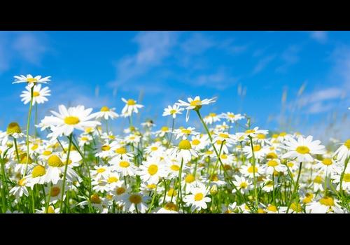 A primavera é um período marcado por belas paisagens formadas pela natureza.
