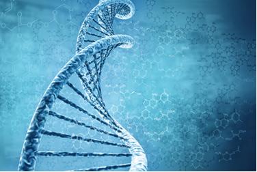 O DNA é composto de moléculas orgânicas