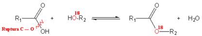 Posição do oxigênio radioativo em reação de esterificação