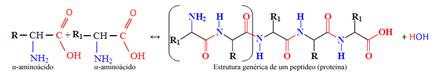 Formação e estrutura genérica de um peptídeo ou proteína