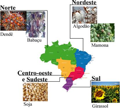 Matérias-primas mais utilizadas para a produção de biodiesel em cada região do Brasil