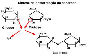 Síntese de formação da sacarose